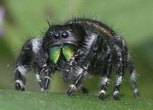 Павук ледь не завадив виступу Ноеля Ґалагера
